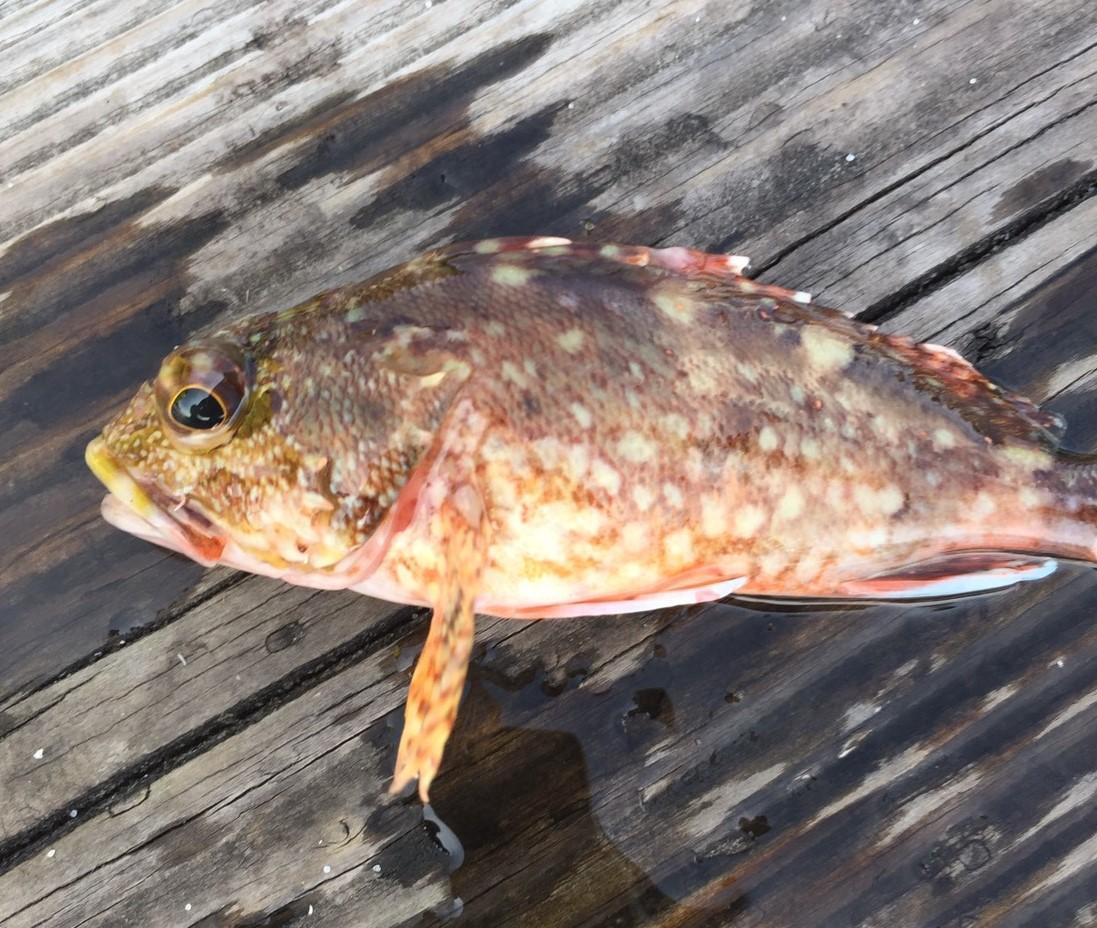f:id:stormfish:20201011031505j:plain