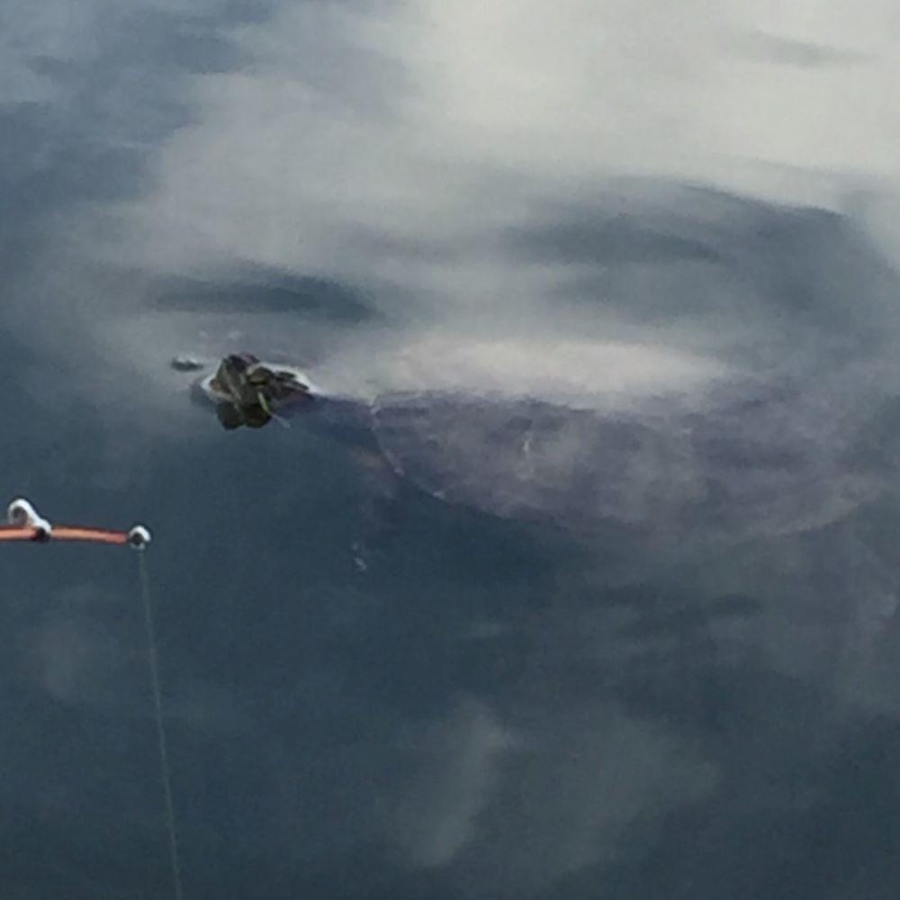 f:id:stormfish:20201024145955j:plain