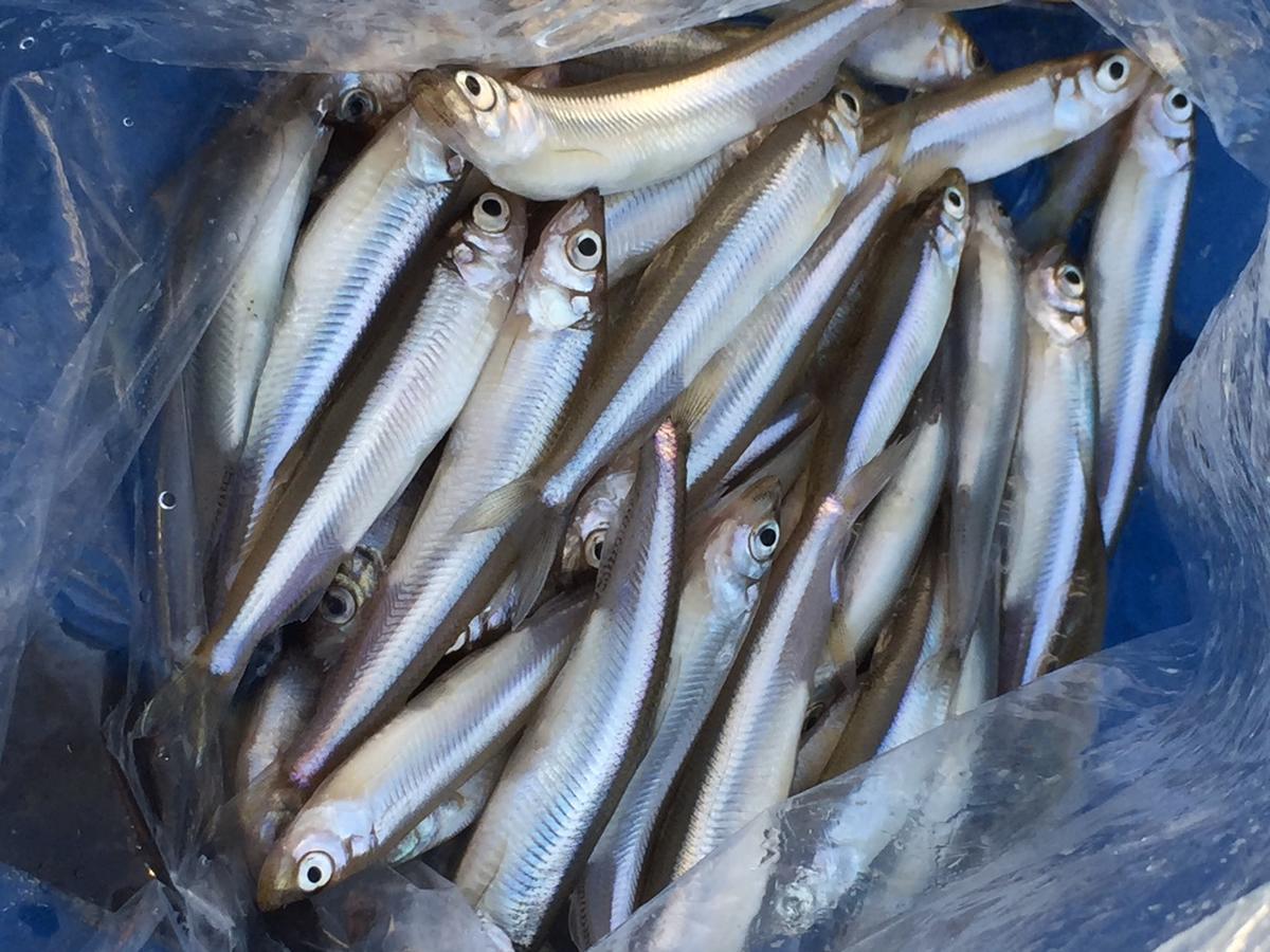 f:id:stormfish:20201024151846j:plain