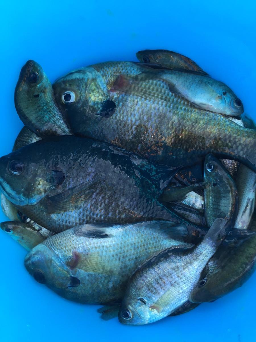 f:id:stormfish:20201024152008j:plain