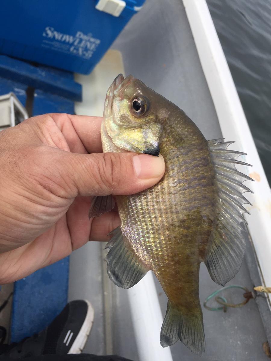 f:id:stormfish:20201024152109j:plain