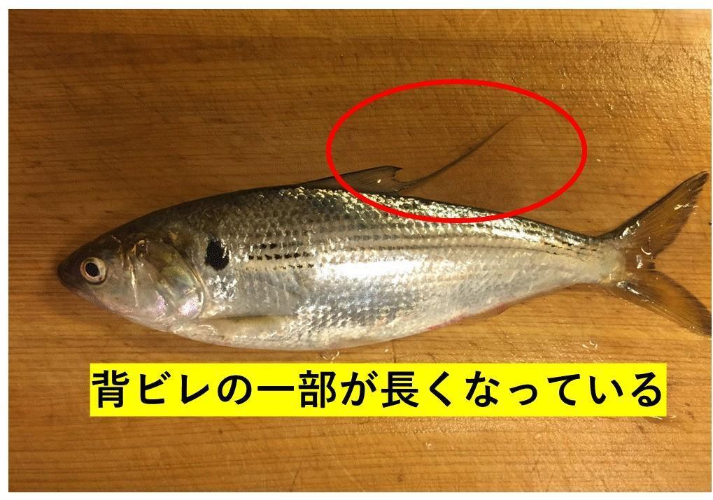 f:id:stormfish:20210104140045j:plain