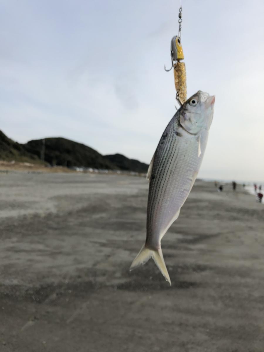 f:id:stormfish:20210104153731j:plain