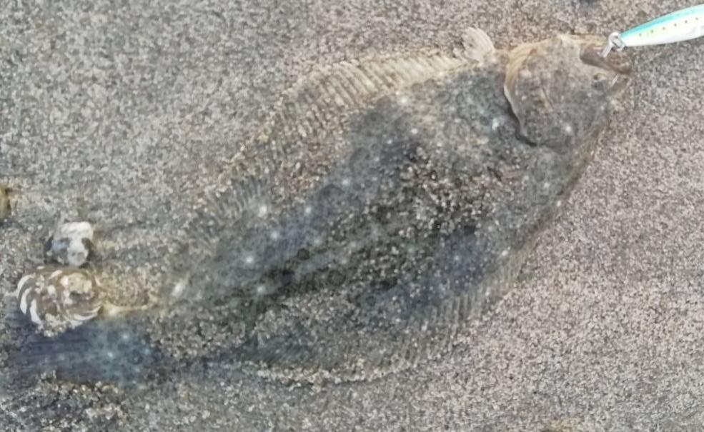 f:id:stormfish:20210104163025j:plain