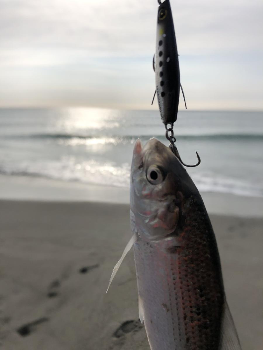f:id:stormfish:20210104173436j:plain