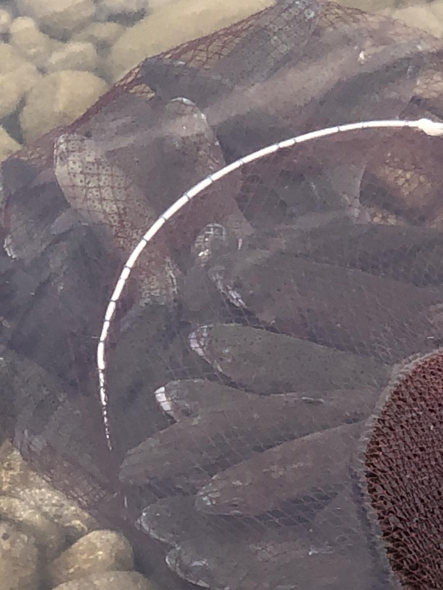 f:id:stormfish:20210306011924j:plain
