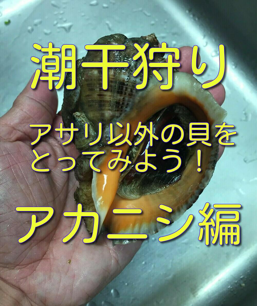 f:id:stormfish:20210404015121j:plain