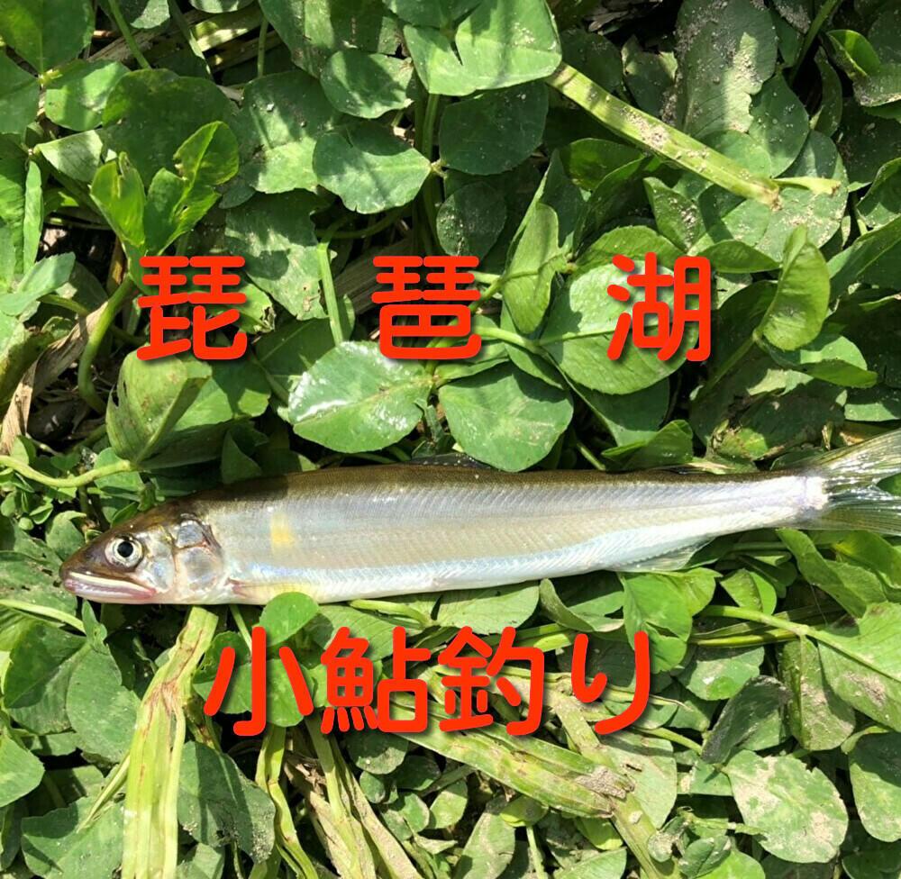 f:id:stormfish:20210503230346j:plain