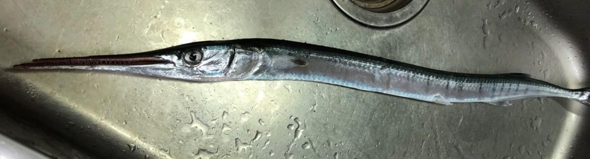 f:id:stormfish:20210920013157j:plain