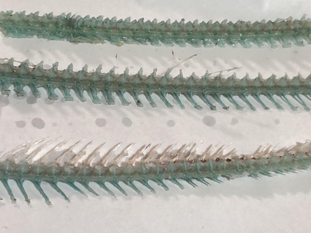 f:id:stormfish:20210921222806j:plain