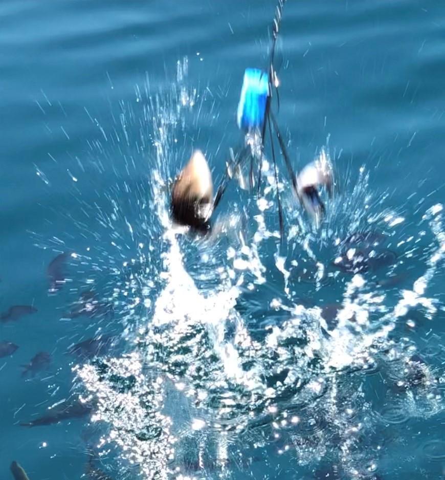 f:id:stormfish:20210930150557j:plain