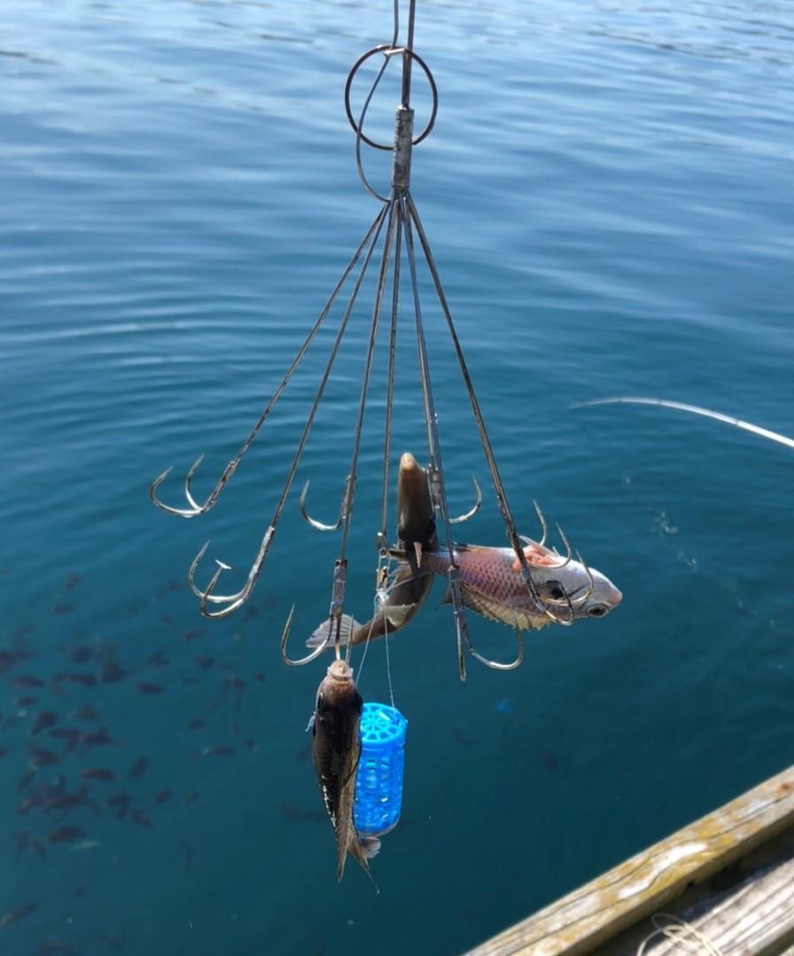 f:id:stormfish:20210930150627j:plain