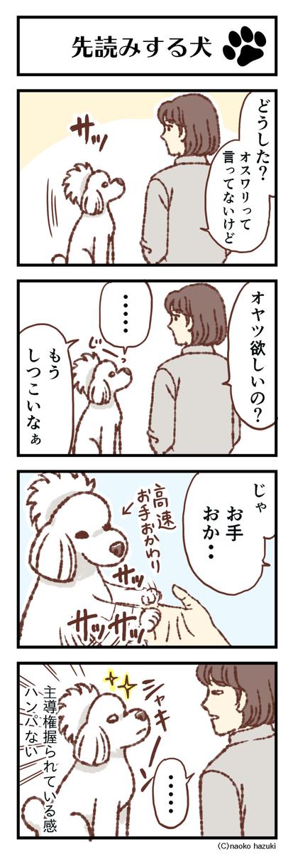 先読みする犬