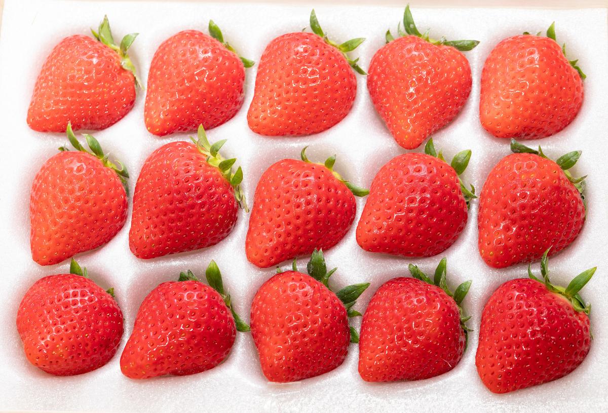 f:id:strawberrybuffet:20190423132749j:plain