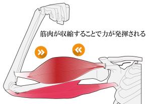f:id:stretch-profesional:20180821102723p:plain