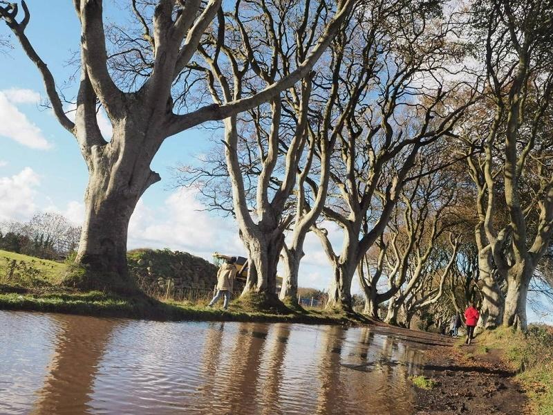 北アイルランドの自然
