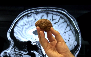 brain-c