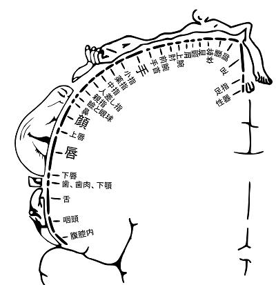 tewo-ugokasu02