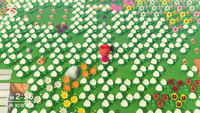 土地を花で埋め尽くす