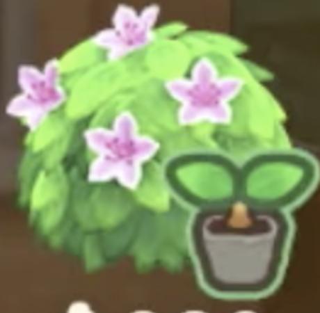 白いツツジの苗