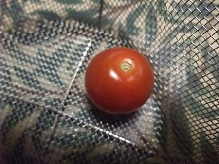 うちで採れたトマト