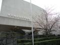 国立近代美術館の桜