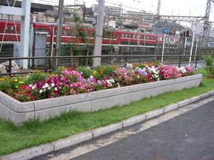 神奈川通東公園の花壇