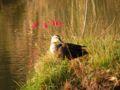 舞岡公園 水鳥