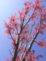 [Life]すごい色の木
