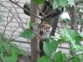 [Life]蜂の巣