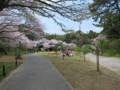 [Life] 桜
