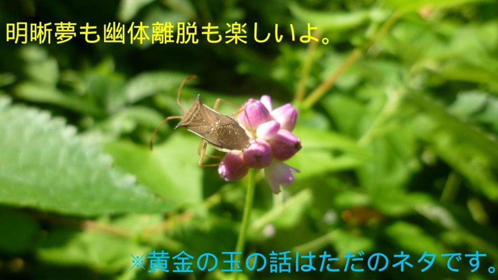 f:id:suganokei:20170910162209j:plain