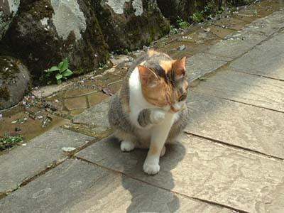 修善寺にて-指月殿前にいた猫