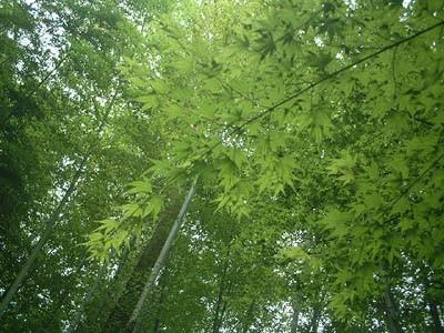 修善寺にて-竹林の小径