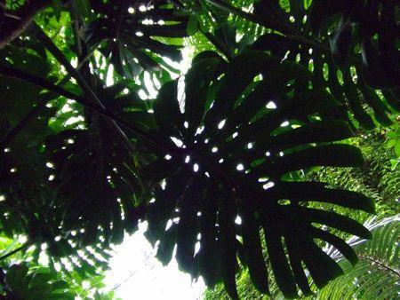 夢の島熱帯植物館 - 木洩れ日