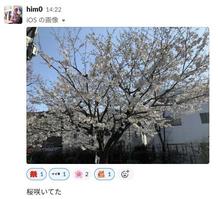桜の報告をする him0 さん