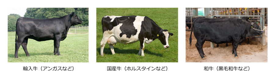 f:id:sugimoto_toyota_factory:20210327173409j:plain