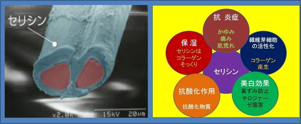 f:id:sugimuratoshio4:20170206173641j:plain