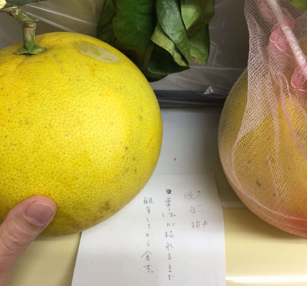 f:id:sugimuratoshio4:20170226090433j:plain