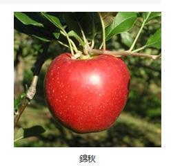 f:id:sugimuratoshio4:20180615202741p:plain