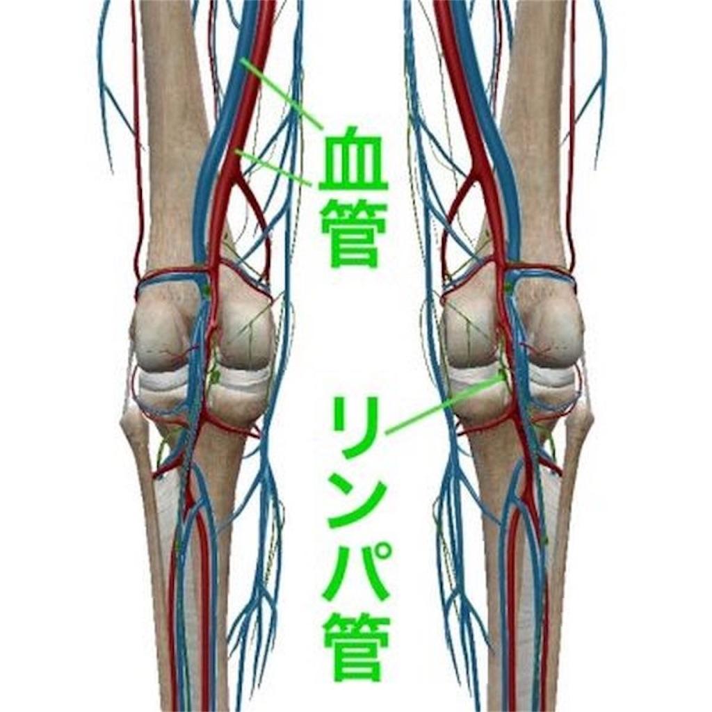f:id:sugita-labo0328:20200304074040j:image