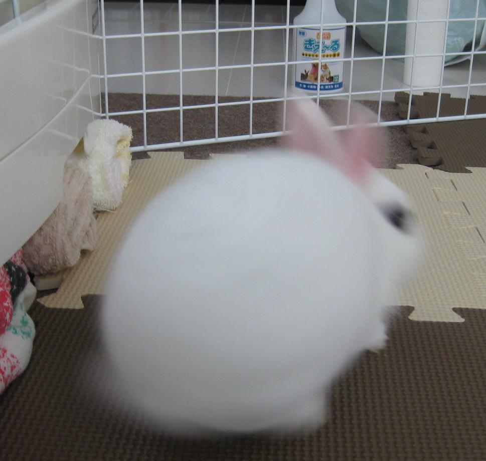 f:id:sugiyamaeko:20170325094035j:plain