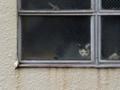 [風景][猫]2011.05.03 三浦海岸