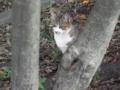 [風景][湾岸][猫]2011.10.02 運河の猫