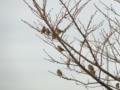 スズメのなる木