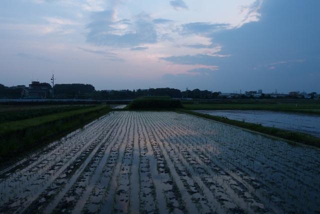 f:id:suijun-hibisukusu:20140621205553j:image