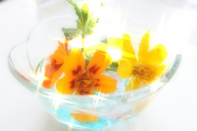 f:id:suijun-hibisukusu:20140722223244j:image