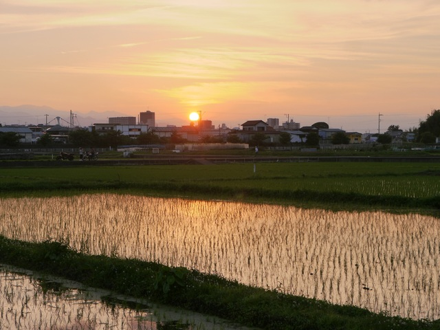 f:id:suijun-hibisukusu:20150706230642j:image