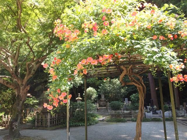f:id:suijun-hibisukusu:20160715230857j:image