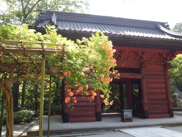 f:id:suijun-hibisukusu:20160715230859j:image